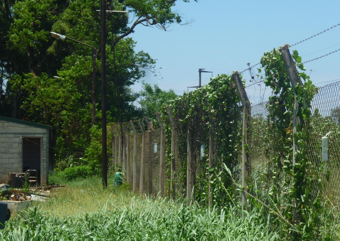 Cajitas con pupas de avispas colgadas en planta de reciclaje de Iguazú