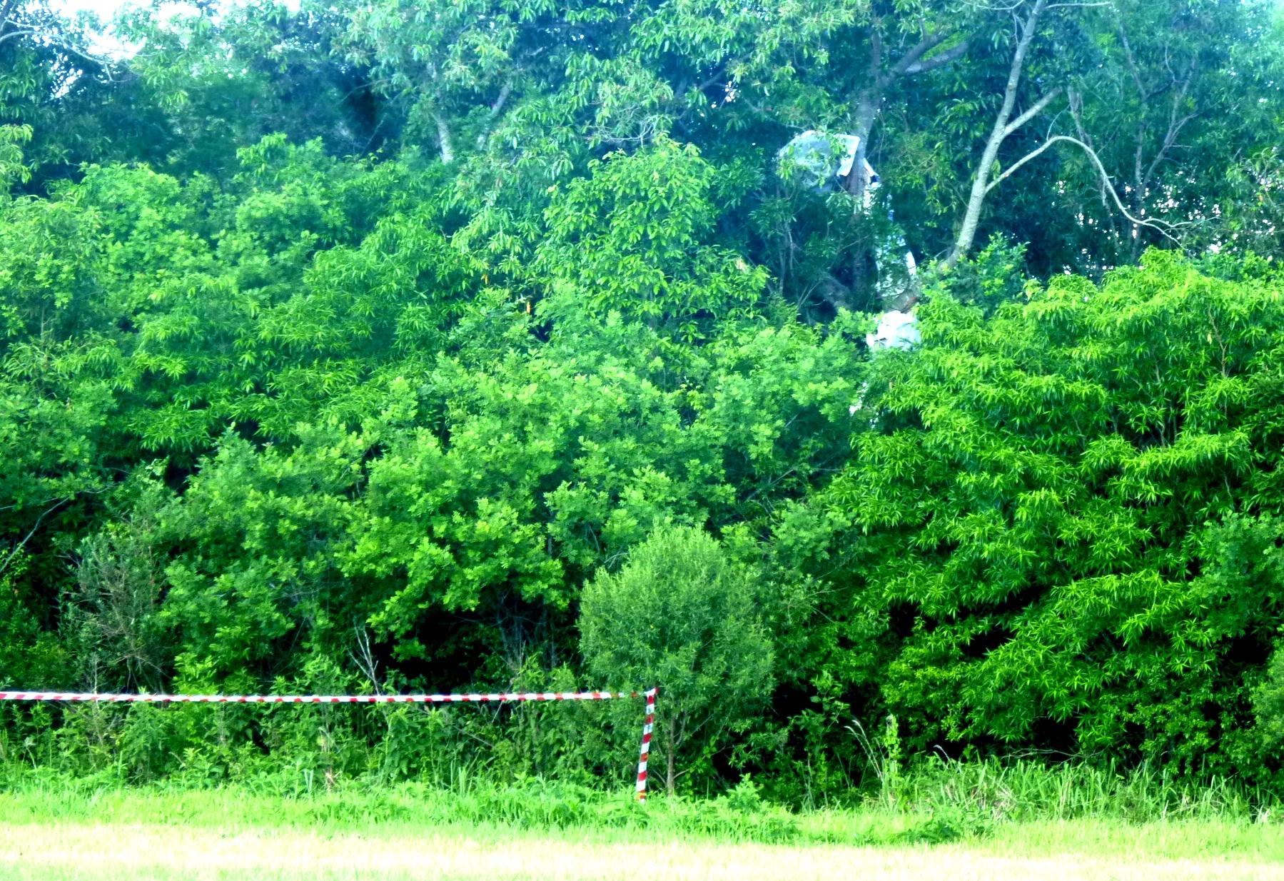 Los restos de la avioneta quedaron sobre las copas de los árboles