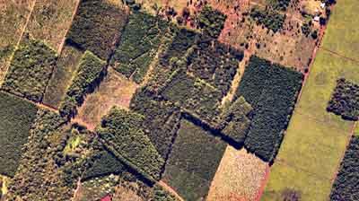 En forestaciones se podrá determinar: superficie cubierta, nivel de raleo, género y especie cultivada y edad de los árboles.