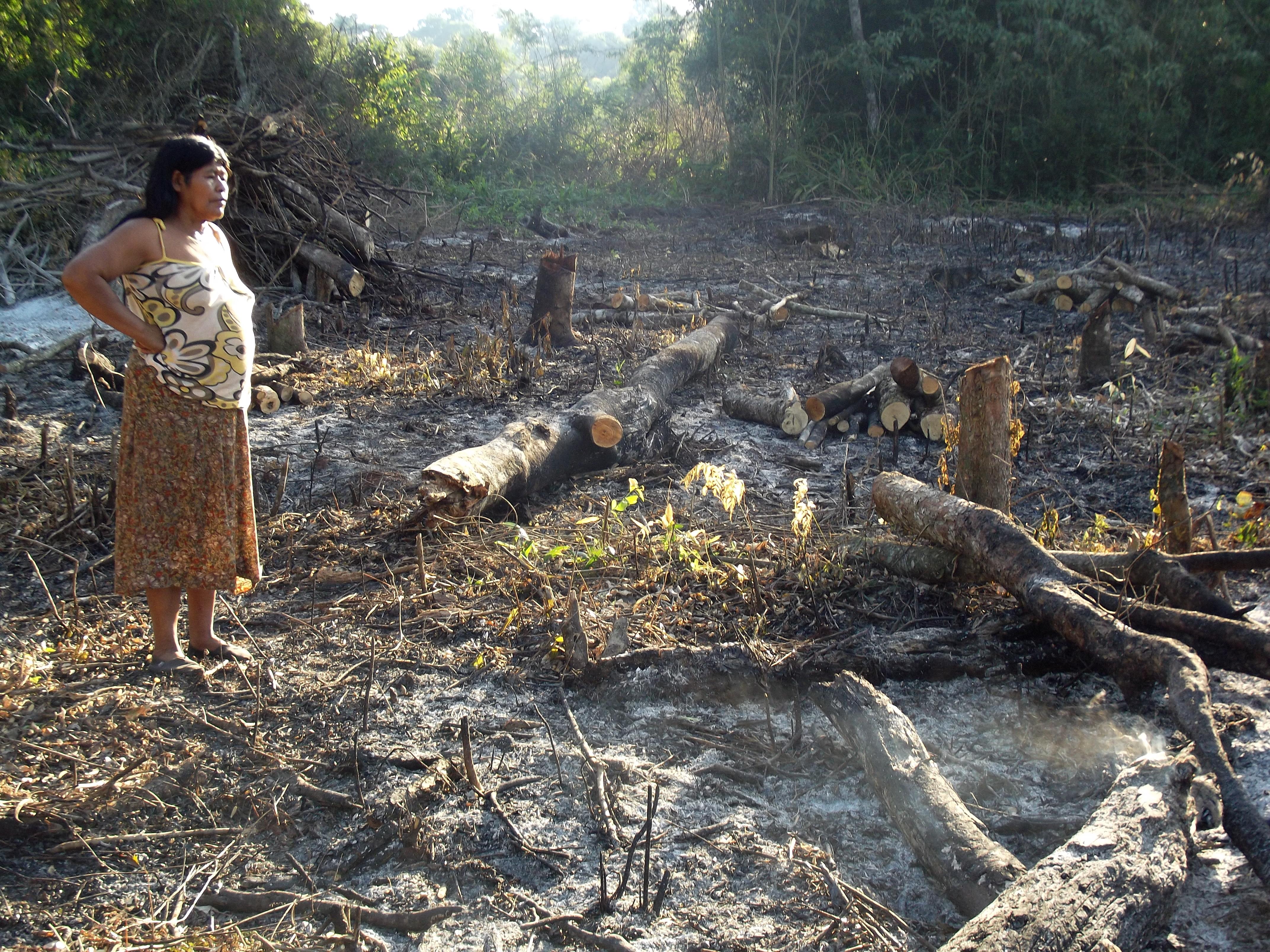 Devastación. La imagen revela el daño causado en las tierras guaraníes y en el medioambiente.