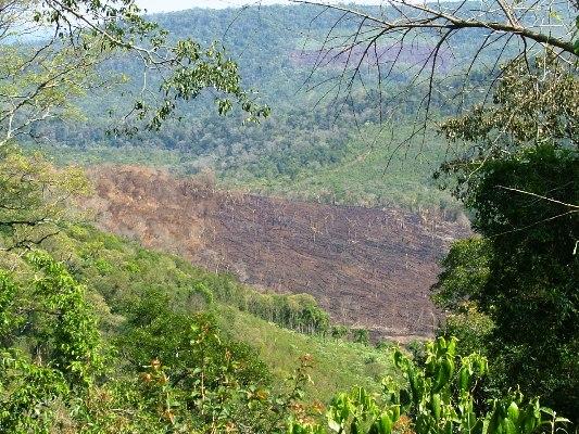 Consecuencias del daño ambiental por intrusión en San Pedro.