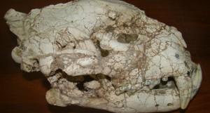 resto fosil yaguareté 2