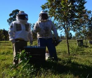 Productores de miel