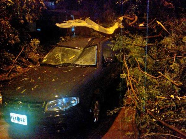 arbol destruyó un auto durante la tormenta