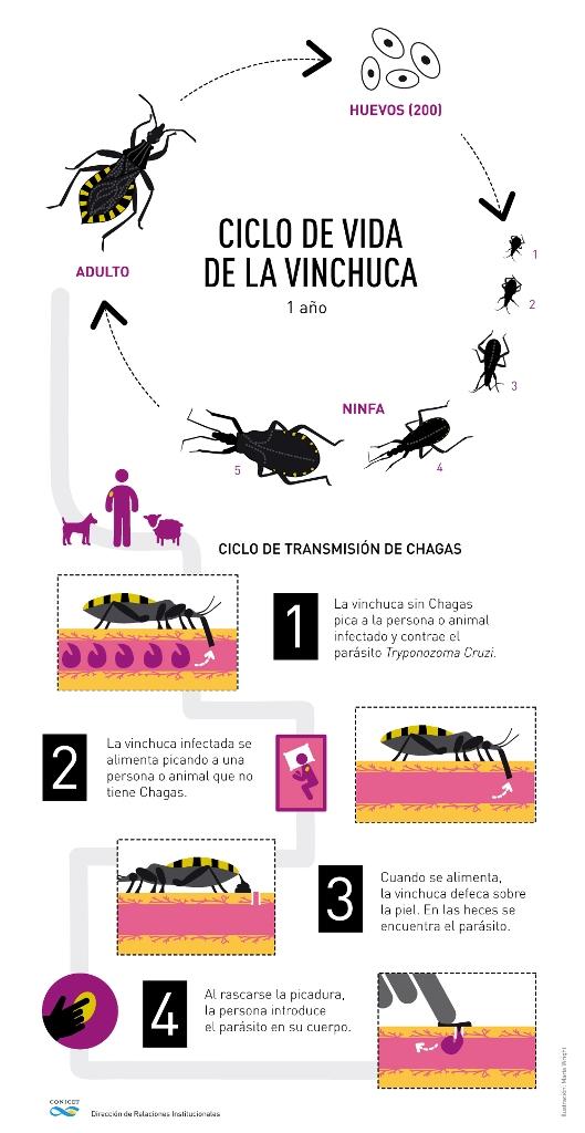 Científicos del CONICET avanzan hacia la creación de una vacuna contra la enfermedad de Chagas
