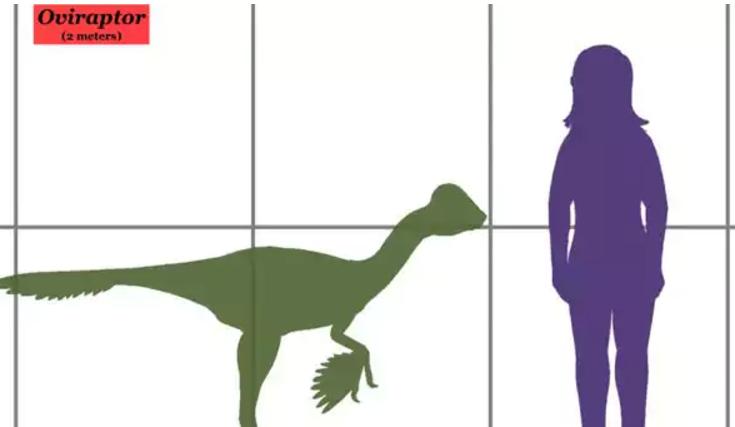 Un niño de 10 años corrigió un error grave del Museo de Historia Natural de Londres