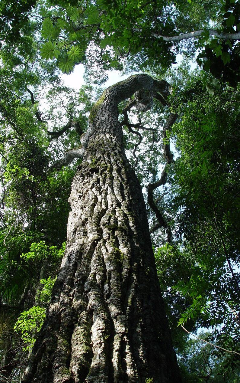 Isambizaga asegura que el hotel que construye en Iguazú respetará normativas ambientales