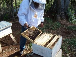 Ecología hará un control de la ubicación de las colmenas de abejas