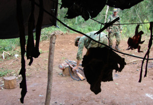 """Piden mayores medidas para frenar la caza furtiva que """"mata y destruye la fauna silvestre"""" de la selva misionera"""