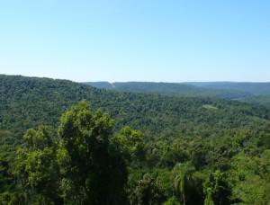 Greenpeace advierte que la deforestación es la principal causa de la crecida de los ríos Iguazú y Paraná