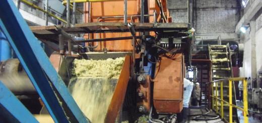 La producción de azúcar misionera será la mayor de los últimos 25 años