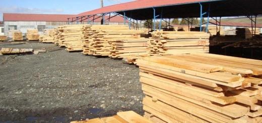 """Garay: """"Mejorar la exportación es un tema que les preocupa mucho al sector maderero"""""""