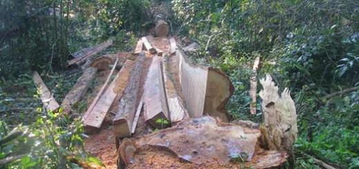 Impondrán millonaria multa a responsable del desmonte de Palo Rosa y palmitos