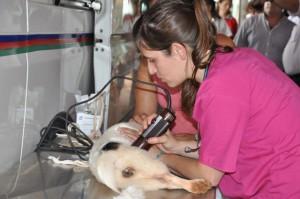 El martes en San Ignacio habrá vacunación y esterilización de mascotas