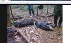 Denunciaron penalmente a cazador que se mostró en Facebook
