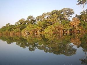 Científicos misioneros trabajan en la reposición arbórea de las zonas afectadas por Yacyretá