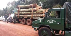 Gendarmería secuestró 17 rollos de madera nativa en San Vicente