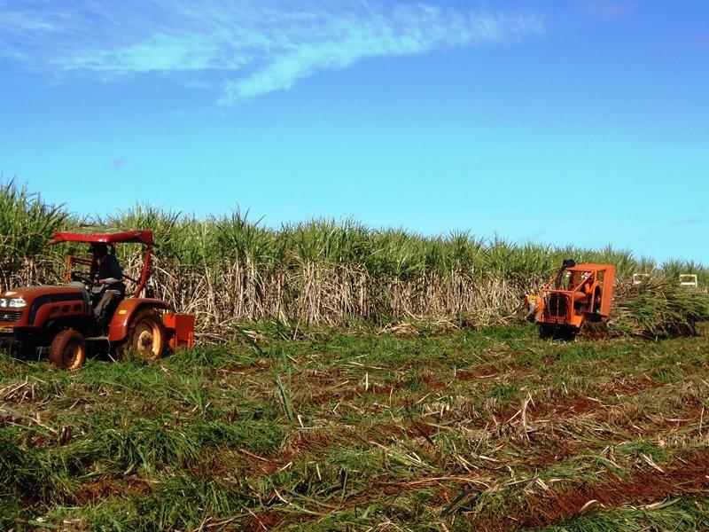 Presentaron prototipo de cosechadora de caña de azúcar