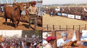 La 20a Expo Rural de Virasoro promete agenda completa para todos los públicos