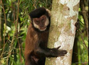 Caza furtiva, intrusión y falta de financiación serían los principales  problemas para la conservación en reservas privadas