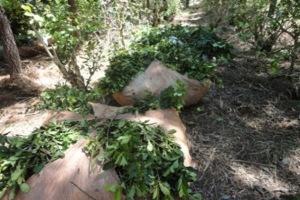 Esclarecen hurto de yerba mate en Los Helechos