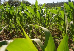 Misiones y Santiago del Estero las provincias con el mayor número de Núcleos de Agricultura Familiar