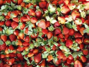 Oferta de frutilla en el Mercado Concentrador