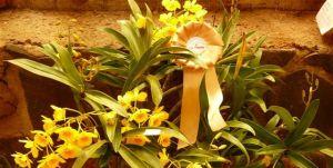Se vienen la Fiesta Nacional de la Orquídea y la Feria de Artesanías del Mercosur