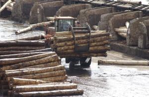 Closs, Ziegler y Barrios Arrechea participarán de un debate sobre políticas forestales en Argentina