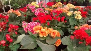 La Biofábrica amplía el horario de atención de la feria de flores
