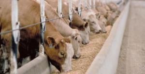 Argentina se incorporó a la cuota de la UE para exportar carne vacuna