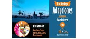 Este domingo jornada de adopción de mascotas y feria, en la Costanera de Posadas