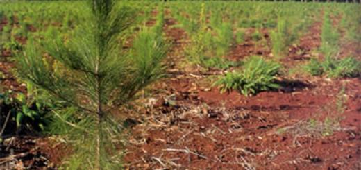 Pagan planes forestales por más de 15 millones de pesos