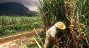 A fin de año saldrá la primera producción de biocombustible del ingenio de San Javier