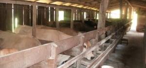 En la cuenca lechera se lleva adelante el Plan Nacional de Control y Erradicación de Brucelosis y Tuberculosis