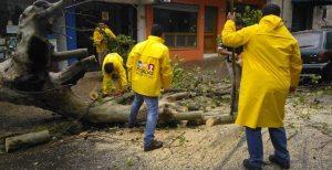La Municipalidad de Posadas levantó árboles y ramas caídas por la tormenta