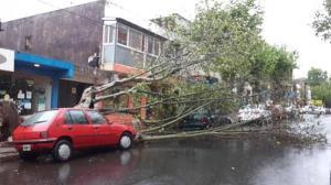 Árboles caídos, algunas voladura de techos y casas inundadas produjo la tormenta en Posadas