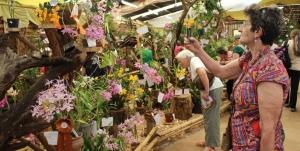 Comenzó la Fiesta Nacional de la Orquídea y Provincial de la Flor en Montecarlo