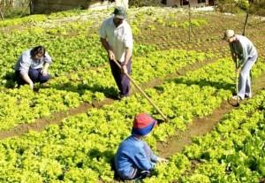 Aseguran que la ley de Producción Agroecológica no perjudicará a colonos
