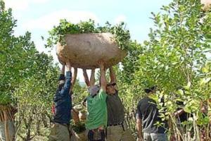 La cosecha de yerba 2014 se perfila como la mayor en diez años