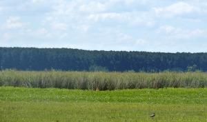 NEA: Frente a las críticas ambientales y sociales sobre la actividad, forestales abrieron tranqueras y demostraron experiencias de manejo sustentable