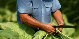 Tabacaleros solicitan mantener el Impuesto Adicional de Emergencia al 7%