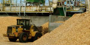 Empresarios proponen políticas públicas para el desarrollo foresto-industrial al 2020