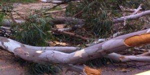 En Alem, murió aplastado por un eucaliptus