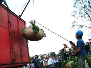 El INYM fomenta a productores a cosechar su propia yerba