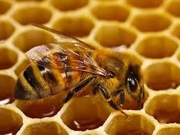 Por las tormentas cayó hasta 40% la producción de miel en Misiones