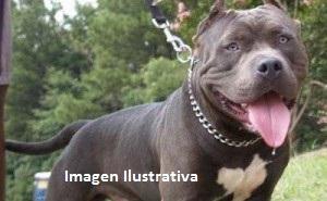 Pitbull atacó a tres perros y al dueño de uno de ellos, un periodista obereño