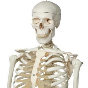 Comprometido hasta los huesos: un profesor donó su esqueleto a la escuela donde trabajó