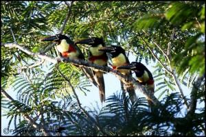 Por el asedio de cazadores en la Reserva Yaguaroundí, propietario suspendió la recepción de turistas y avistadores de aves