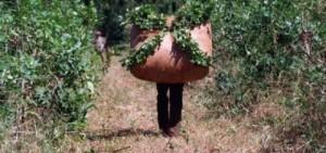 Yerba mate: la Secretaría de Agricultura fijó en 3,95 el kilo de hoja verde y 14,60 el de canchada